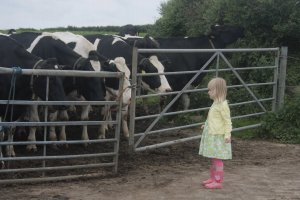 A little girl was fasinated with the cows